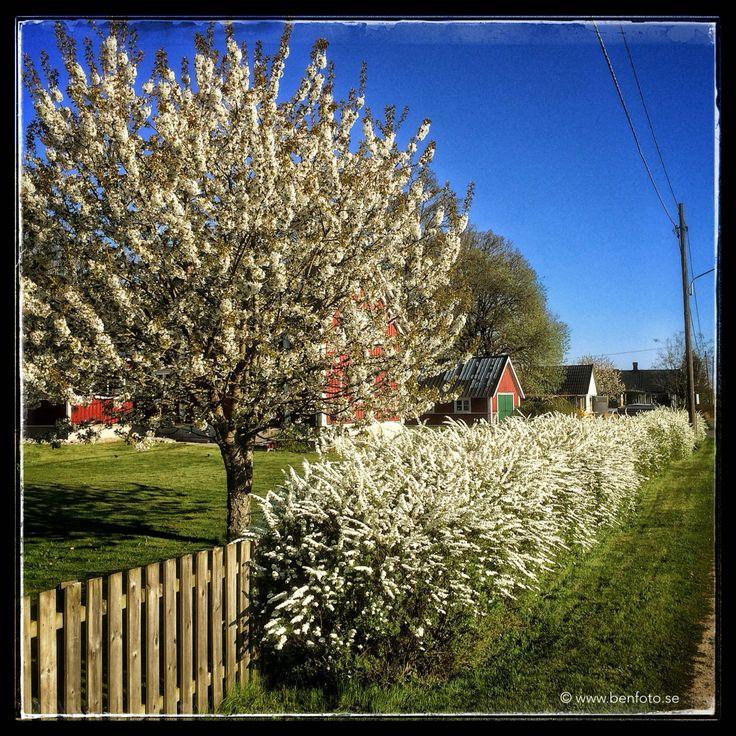 Springtime in Elleholm.