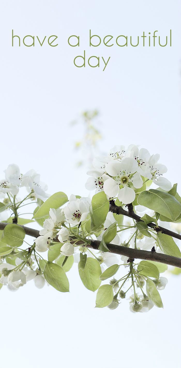 Have a Beautiful Day Card with Apple Tree Flowers