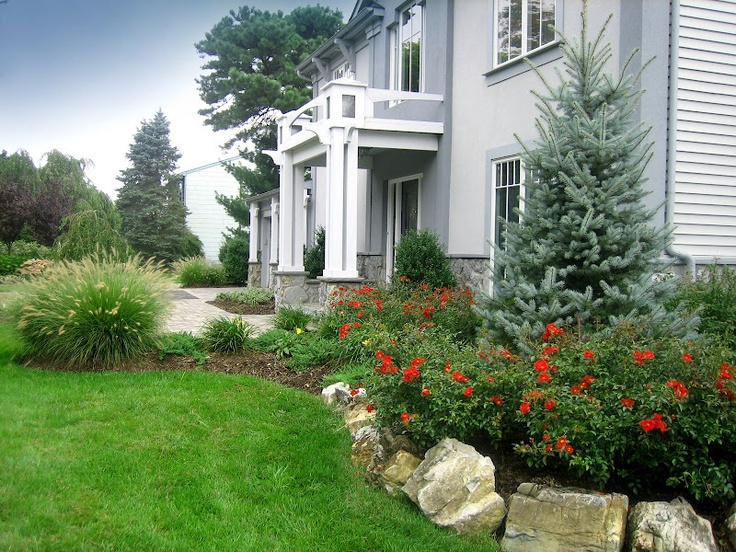 Landscape plantings bakeri blue spruce red carpet rose for Fountain grass landscaping ideas