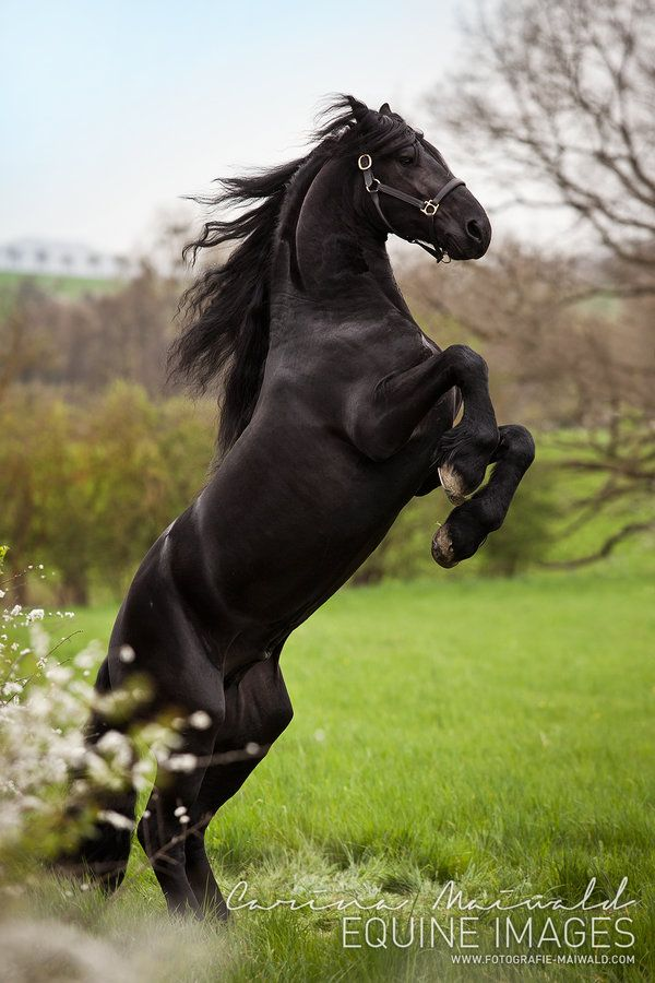 Rising Stallion by equine-images on deviantART