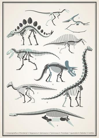 Dinosaur skeletons poster decal - vintage