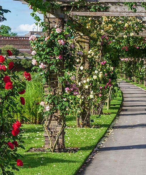 Pnoucí růže ZDARMA Dárek bude přidán ke každé nové objednávce! - Neplatí pro přiobjednávky. Akce platí pouze pro objednávky učiněné v eshopu od 18.2.2016 do 22.2.2016 do 10:00 hodin. http://eshop.starkl.com/cely-sortiment/