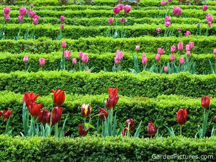Gardens: Gardens Ideas, Pink Flowers, Tulip, Flower Gardens,  Labyrinths, Hay Bale, Beautiful Gardens, Spring Flowers Gardens, Maze