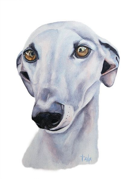A loving soul. Greyhound  Art print size 8x12 by TanjaOnTheWall, €20.00