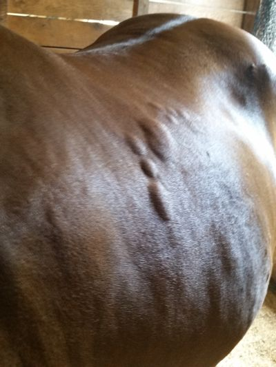 Allergies and horses.    http://www.proequinegrooms.com/index.php/tips/grooming/does-your-horse-have-allergies/