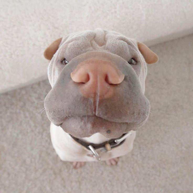 Cutie! Instagram photo by @dogsofinstagram