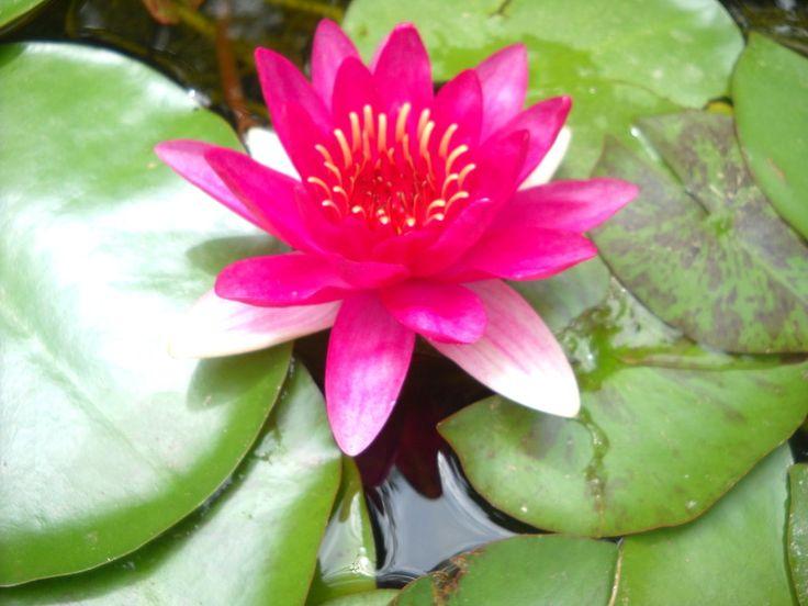 Plantas acuáticas | facilisimo.com