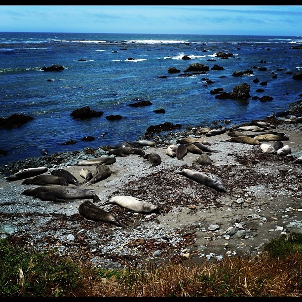 22 best images about northern ca beaches on pinterest for Best northern california beaches
