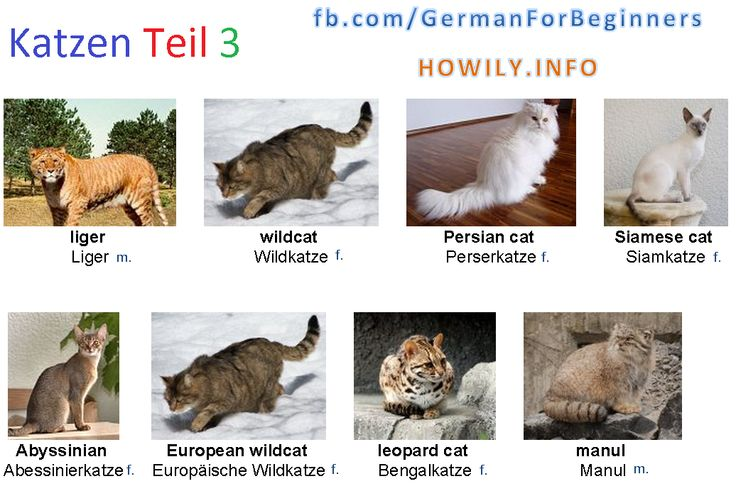 German For Beginners: Cat 3