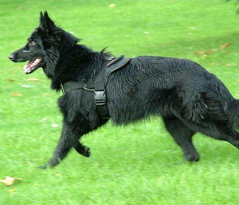 Hundegeschirr aus Nylon für Belgischen Schäferhund