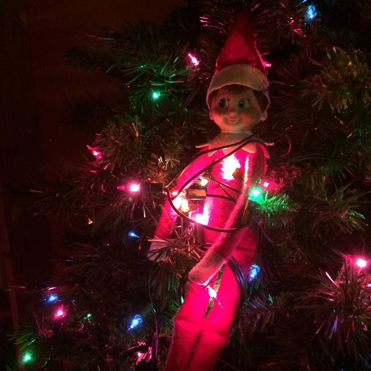 Day 11-Bernard is helping put lights on the tree! I know it's a little sad the tree isn't up yet, but I just know Bernard is going to be a huge help!!!