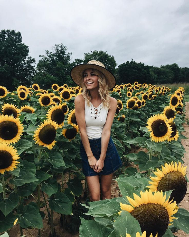 Sunflower field.