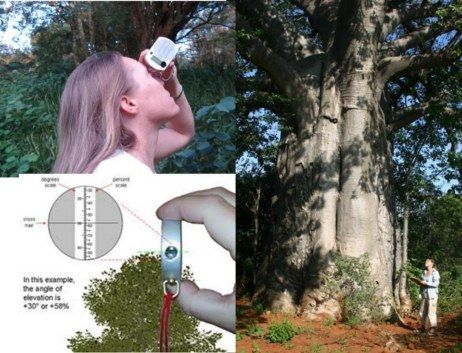I am often asked how to measure the height of a baobab. I use a clever little device called a clinometer. Read more to find out how I do it.