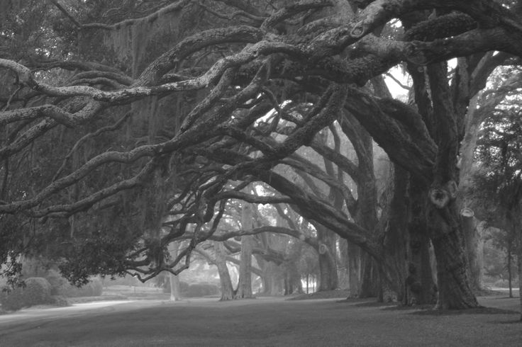 Avenue of the Oaks on Saint Simons Island, Georgia www.GoldenIsles.com