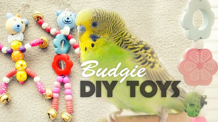 how to make cockatiel toys