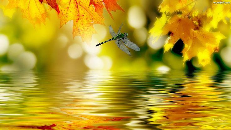 jesień na żółto