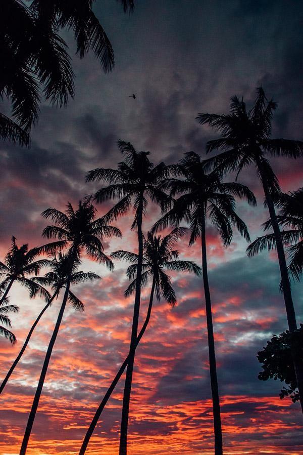 Summer Nights – robert bremer