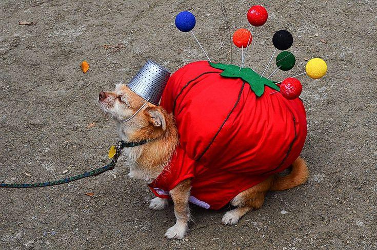 костюм для собаки - Поиск в Google