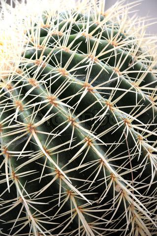 17 best ideas about types of cactus on pinterest succulent plants succulents and cacti garden. Black Bedroom Furniture Sets. Home Design Ideas
