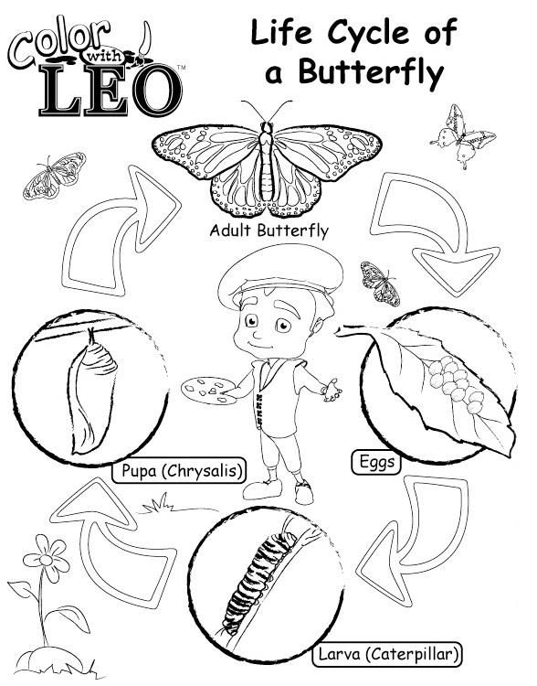 Life Cycle Of Butterfly Coloring Pages Butterfly Coloring Page