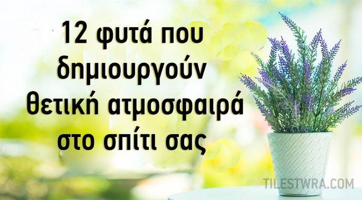 12 φυτά που δίνουν θετική ενέργεια στο σπίτι σας - Τι λες τώρα;