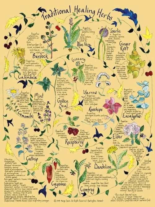 Traditional Healing Herbs ... Let's get natural!