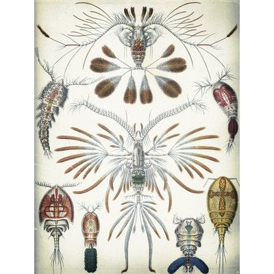 Graffitee Studios Florals 'Haeckel Copepoda' Painting Print on Wrapped Canvas