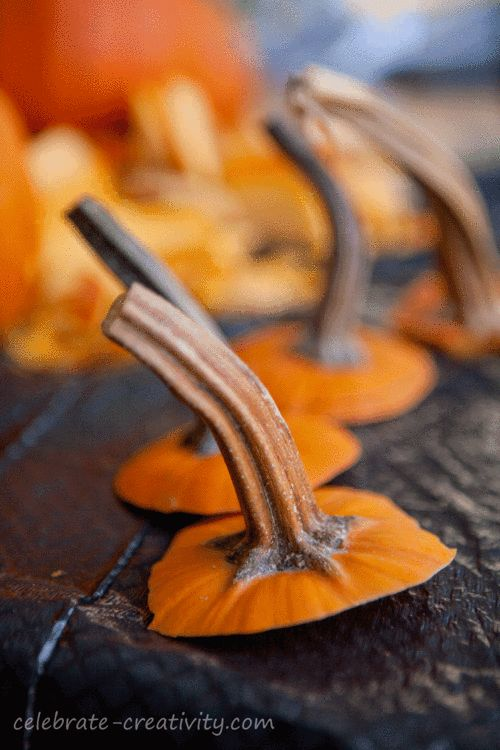 How to dry pumpkin stems for crafting