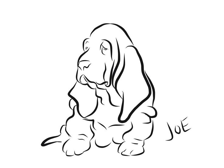 dog basset coloring pages - photo#23