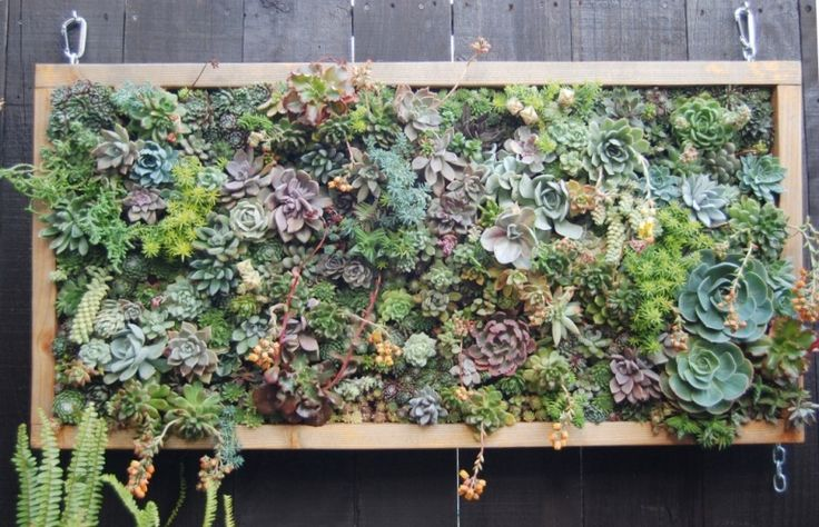 Low maintenance succulent vertical garden...how to here:     http://ewainthegarden.blogspot.com/2012/02/low-maintenance-succulent-vertical.html