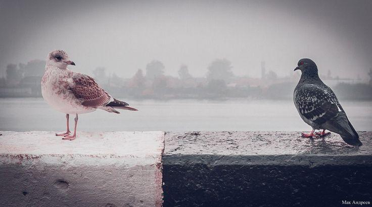 Arkhangelsk | Архангельск. Birds. Embankment
