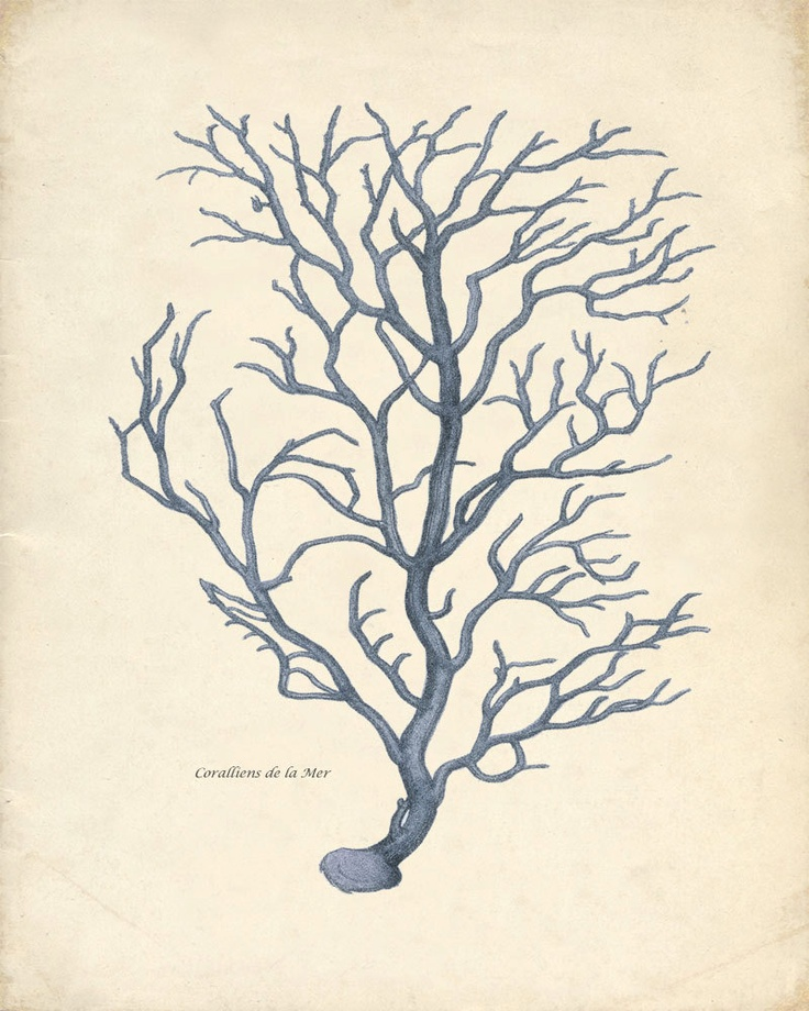 BeeBee.Grace: Vintage Sea Life Prints
