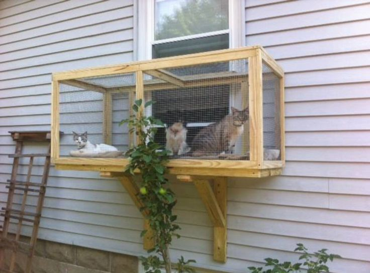 I will do this when I get my own place, because I'm a cat lover. And I don't like my cats being outside.