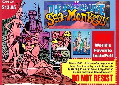 Sea Monkeys !!  I really imagined that one day I'd wake up and see the family grown up and playing cards!!