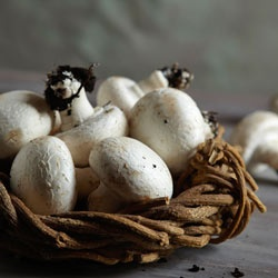 White Button  This is the most common variety of mushroom. The culinary choice is endless - from salads to pizza, stir-fries and side dishes - it is the most versatile mushroom of them all.