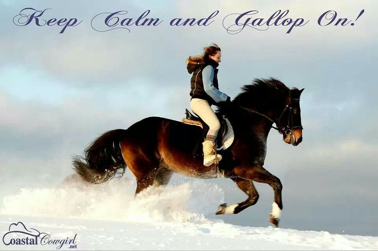 Keep Calm and Gallop On!