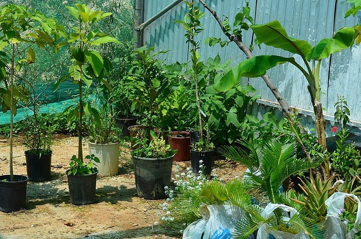 Some of the plants are trully tropical, arabica coffee, mango, bananas and avocados