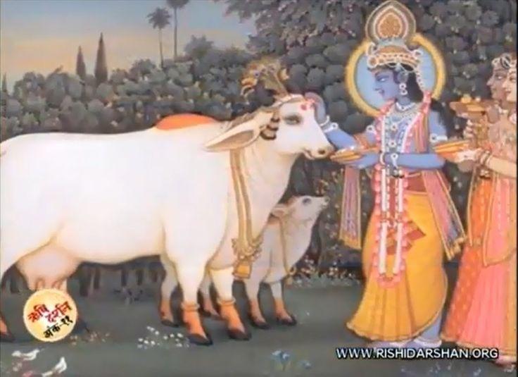 Divine Story Behind GopAstami (गोपाष्टमी दिव्य कथा )  Pujya Sant Shri As...