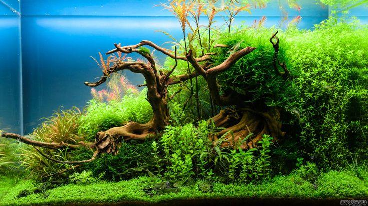 Zur Zeit erstmal nur das Hardscape, die Bepflanzung folgt noch :)