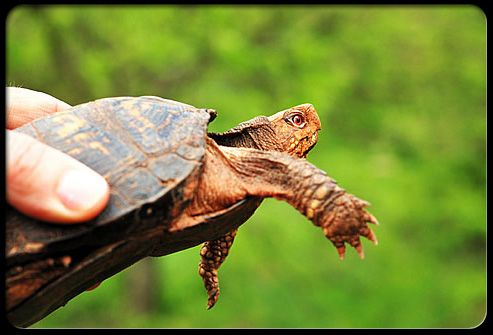 Pets such as turtles may carry salmonella.