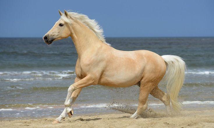 20 beste ideen over Paardenfotografie op Pinterest  Paard fotos Paard fotos en Paard