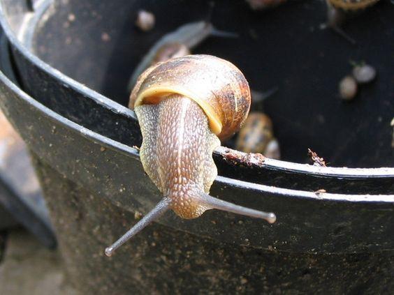 Hausmittel gegen Schnecken im Garten