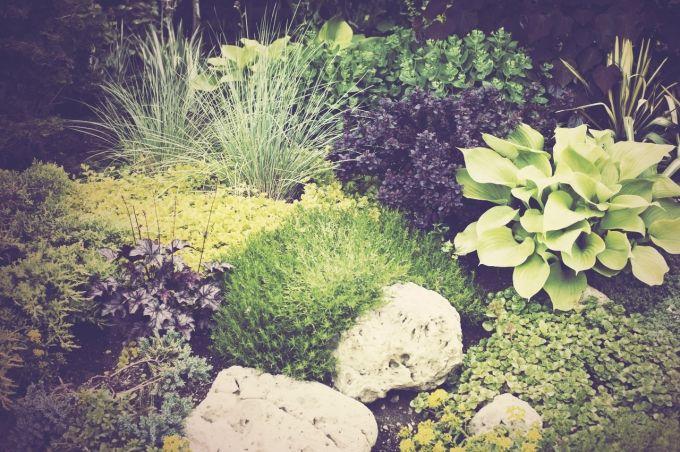 Im Schatten wachsen keine Pflanzen – schon gar nicht blütentragende Schönheiten? Das stimmt nicht!Wir zeigen, die Sie auch im Schatten einen farbenfrohen Garten gestalten.