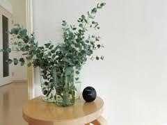 「ユーカリ 花瓶」の画像検索結果