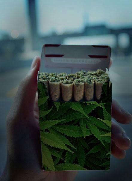 Different Methods for Growing Marijuana Growers of marijuana have different methods of growing marijuana. One grower may have a different style from another.