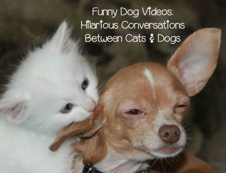 Check out this funny dog video of a cat taking on his Beagle bestie, plus laugh out loud over more hilarious clips of talking dogs and cats!