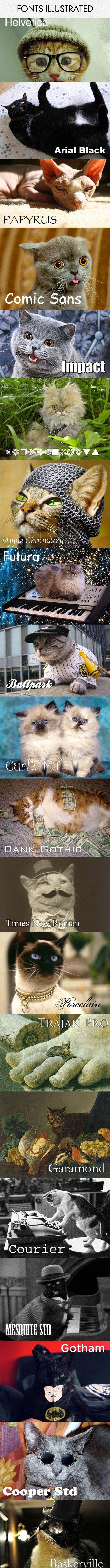 17 Terbaik Ide Tentang Humor Kucing Di Pinterest Anak Kucing