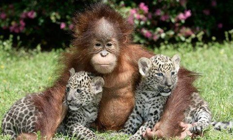 got you.Orange, Friends Photos, Best Friends, Animal Baby, Snow Leopards, Orangutan, Baby Animal, Animal Friends, Animal Photos