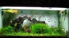 Süßwasseraquarium - Tierdoku