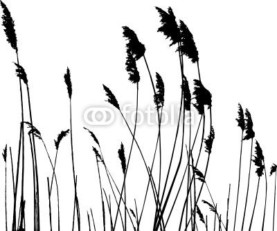 tall grass silhouette.  Tall Bird Silhouette Reeds  Google Search In Tall Grass Silhouette T